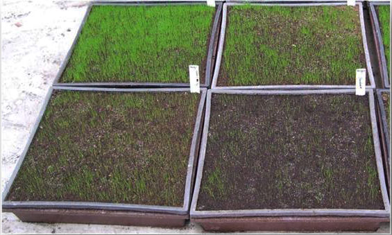 grass samples from Royal Barenbrug Group in Netherlands